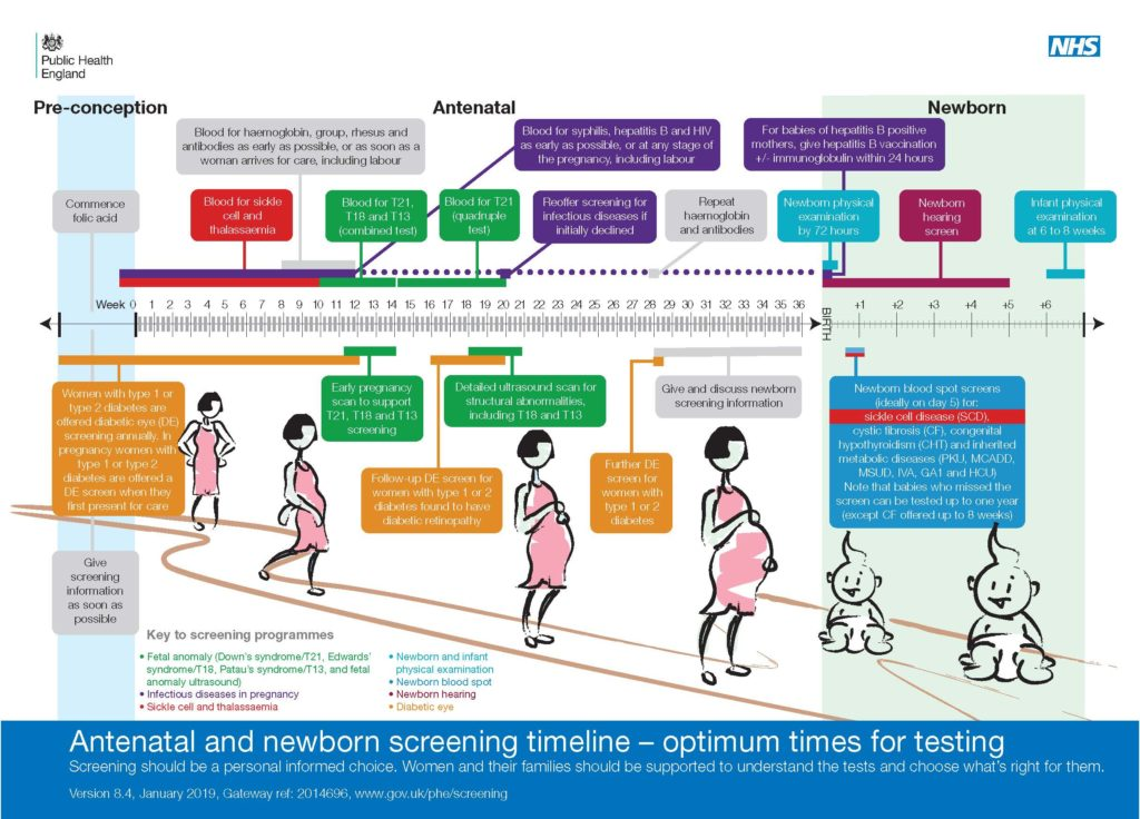 A diagram showing the timeline for antenatal and newborn screening
